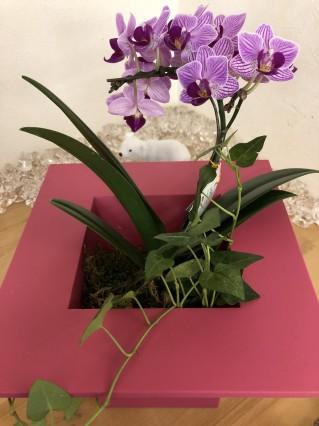 患者さんんイニリューアルオープンのお花をいただきました。
