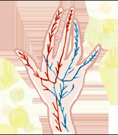 毛細血管は健康のバロメーター